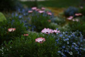 Modification du taux de T.V.A. applicable à la fourniture de plantes et de fleurs