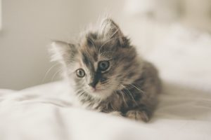 Stérilisation des chats par un vétérinaire : Taux de TVA 6 %